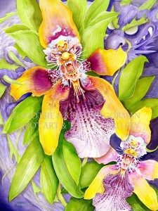 dracoon cidium wyattianum shotsie gorman  watercolor