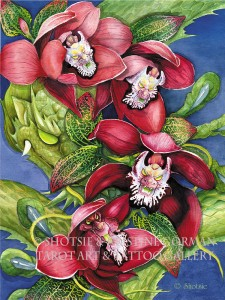 red orchid dragon  shotsie gorman watercolor